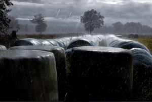bernard la pluie